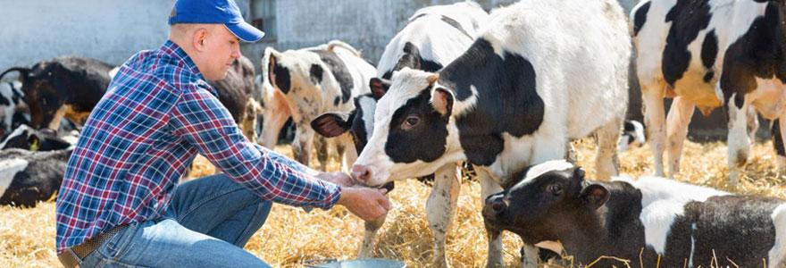 Alimentation des bovins